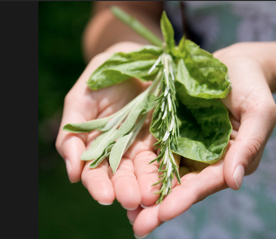 fresh herbs Rediscover Growing Your Own Herbs EAT LOVE SAVOR International luxury lifestyle magazine and bookazines