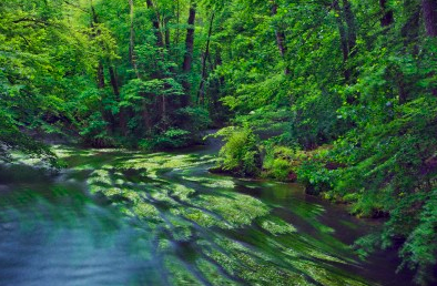 River in beech forest Bavaria Germany