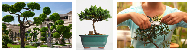 Luxurious Leisure - Bonsai eatlovesavor.com