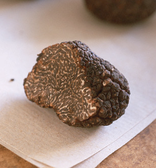Perigord truffle Distinguishing Between Perigord Black Truffles and Chinese Black Truffles EAT LOVE SAVOR International luxury lifestyle magazine and bookazines