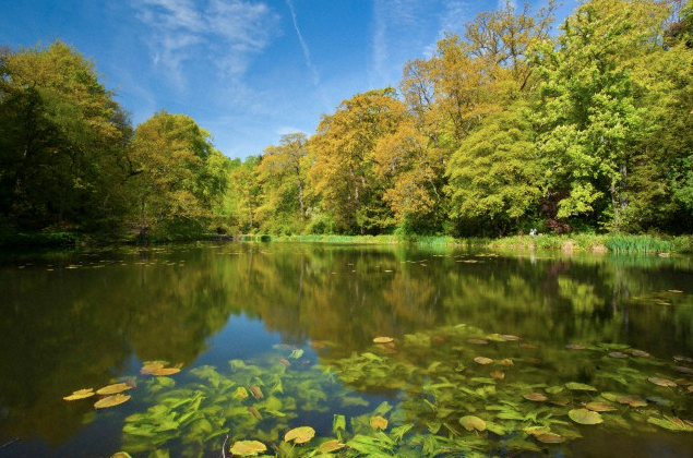 Pond at Wallington Hall Northumberland England Reconnect With Nature - Lovely Pond - EAT LOVE SAVOR International luxury lifestyle magazine and bookazines