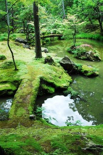Kyoto Japan moss garden flexjet25