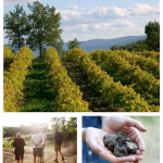 Experience Provence on a Fine Food Farm for a Sensory Experience!