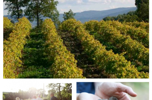 les pastras Experience Provence on a Fine Food Truffle Farm for a Sensory Experience! - EAT LOVE SAVOR International luxury lifestyle magazine and bookazines