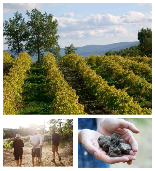 les pastras Experience Provence on a Fine Food Truffle Farm for a Sensory Experience! EAT LOVE SAVOR International luxury lifestyle magazine and bookazines