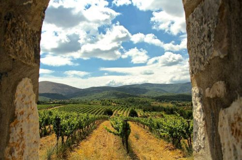 TseleposVines Saving Greek Wine Making Grapes From Extinction - EAT LOVE SAVOR International luxury lifestyle magazine and bookazines