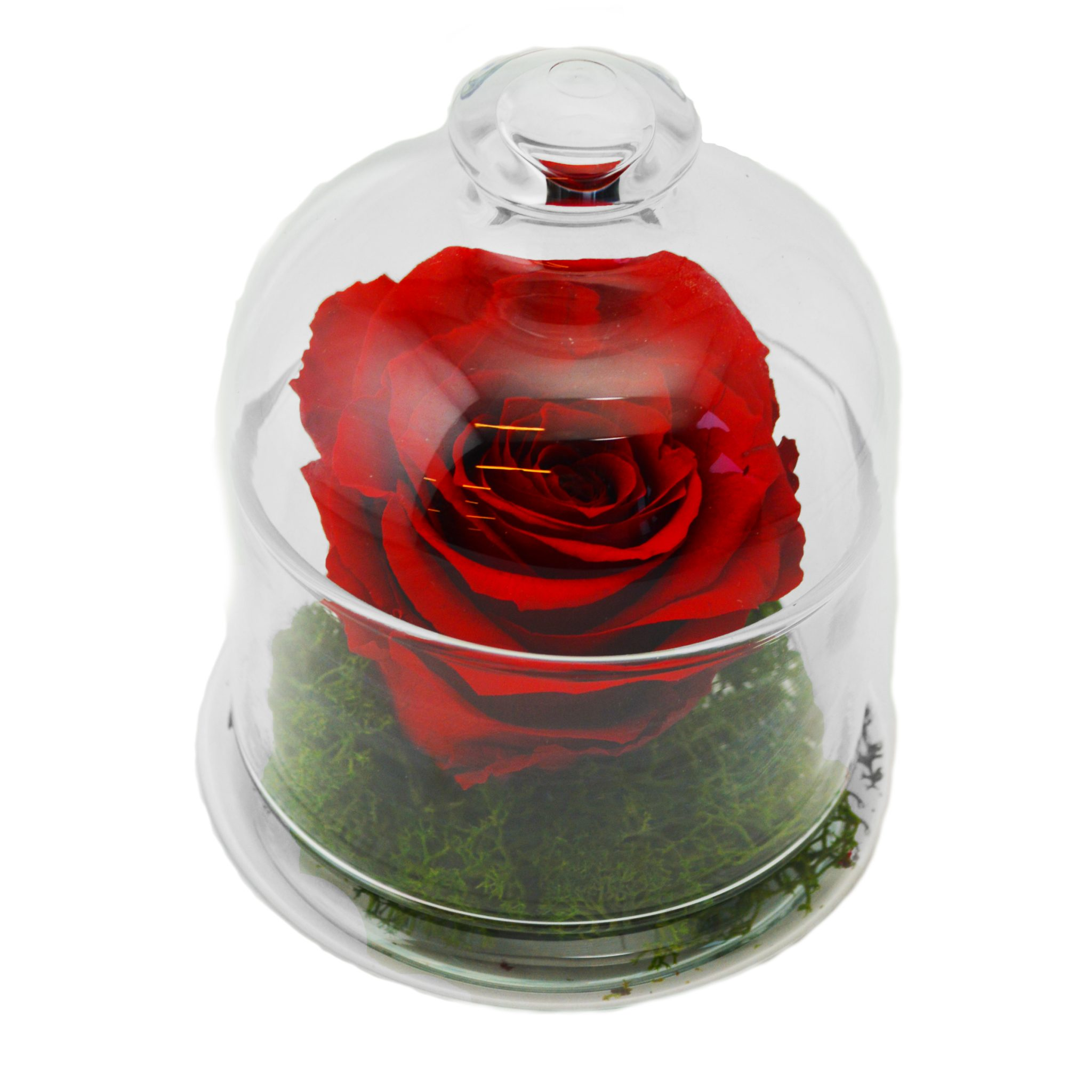 "beauty and the beast rose glass cloche Beautifully Preserved Roses from Luxe Bloom® Official Rose in ""Beauty and the Beast"" Film EAT LOVE SAVOR International luxury lifestyle magazine and bookazines"