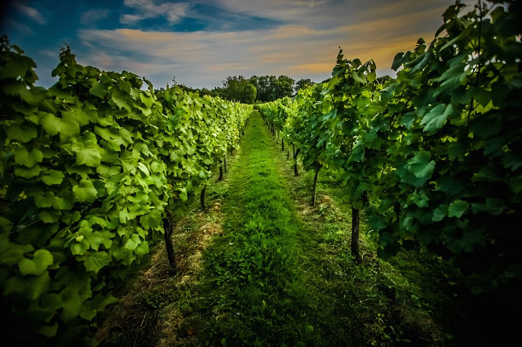 Discover Greyfriars Vineyard and The Coral Room, Showcasing an English Only Wine List