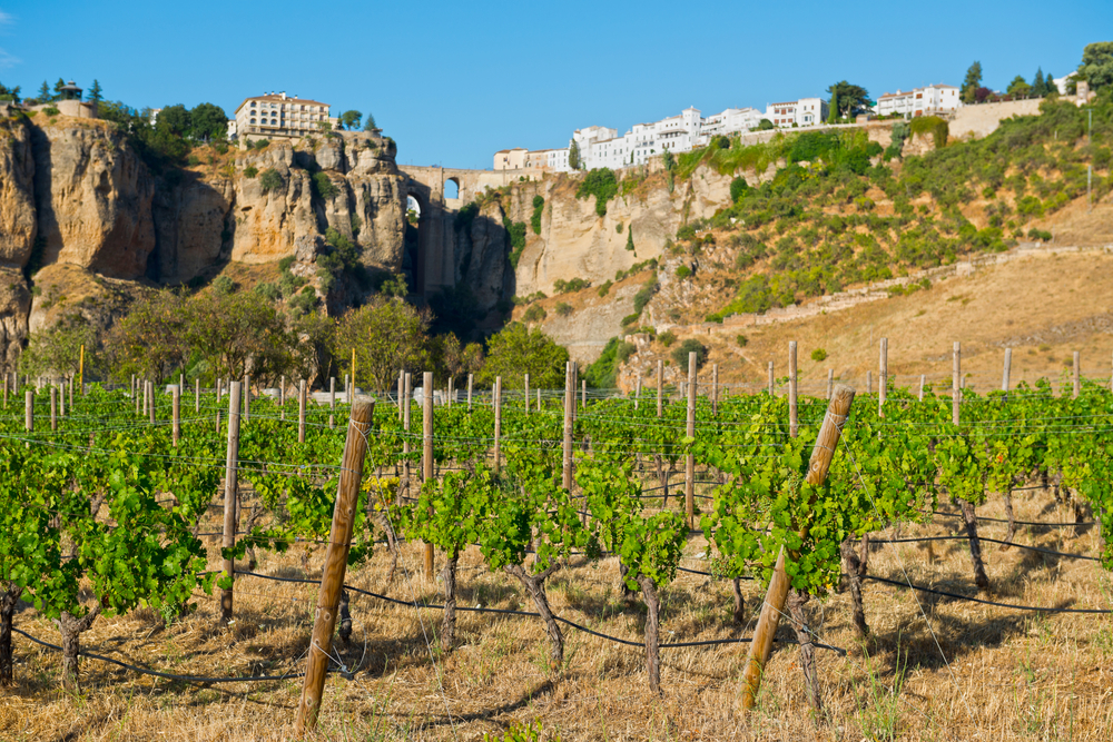 resorts in costa del sol CLC world ronda wine route Vineyards to Visit on your Costa del Sol Holiday EAT LOVE SAVOR International luxury lifestyle magazine and bookazines